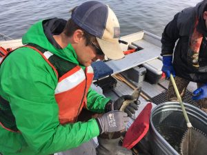 WDNR fisheries biologist (and CFL alum), Dan Oele, takes measurements of a walleye during a spring sampling trip. Photo: Adam Hinterthuer
